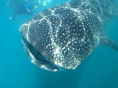 Dive Cabo San Lucas Whale Watching