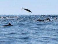 Banco de delfines en altamar
