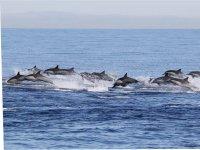 Delfines nadando en Puerto Escondido