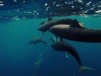 Disfrutando de los delfines