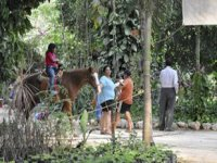Horseback riding in family