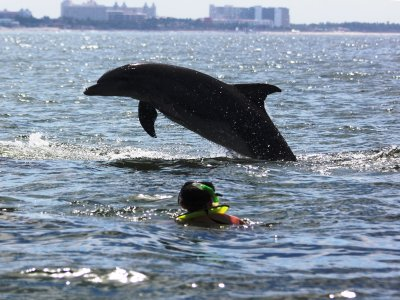 Dolphins and snorkeling tour in Bahía de Banderas