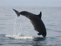 Tour de delfines y snorkel en Bahía de Banderas