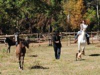 Horseback riding experience