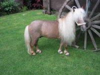 bombon pony