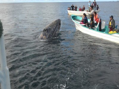 Papato Expeditions Whale Watching