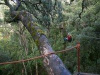 Recorrido canopy