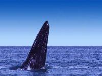 Ballena saliendo del agua