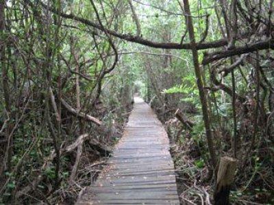 Ecoturismo Yucatán Caminata