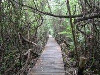 Cenote walks