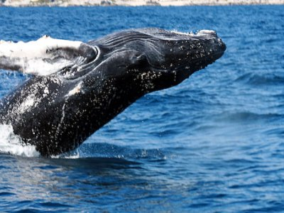 Tour de Avistamiento de Ballenas en Cabo