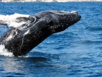 Whales Tour in Los Cabos