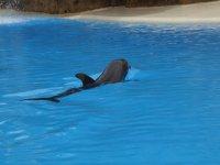 delfín en situación controlada