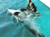 interactua con los delfines