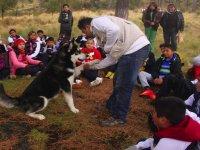 mexican wolf talk