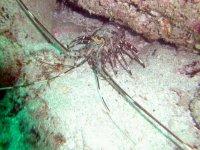 Look at the prawns
