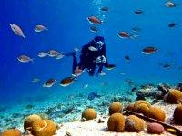 Meet the incredible marine life