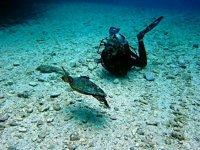 Meet underwater life