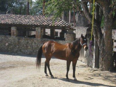 Morelos Trails Cabalgatas