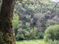 Walk through Valle de Bravo
