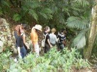 Lacandon Jungle