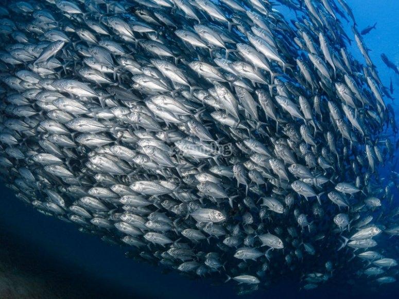 Descubre las maravillas del Mar de Cortés