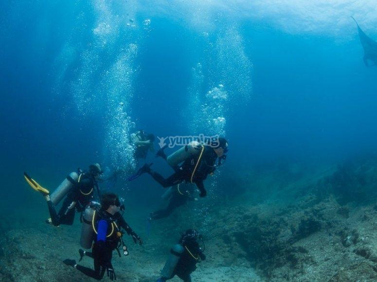 Experiencia de  buceo en Baja California