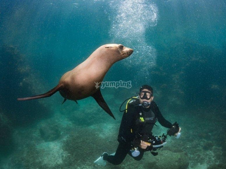 Haciendo amigos bajo el agua