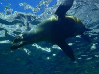 Snorkel with sea lions in Sea of Cortez