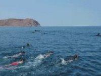 Snorkel Baja California