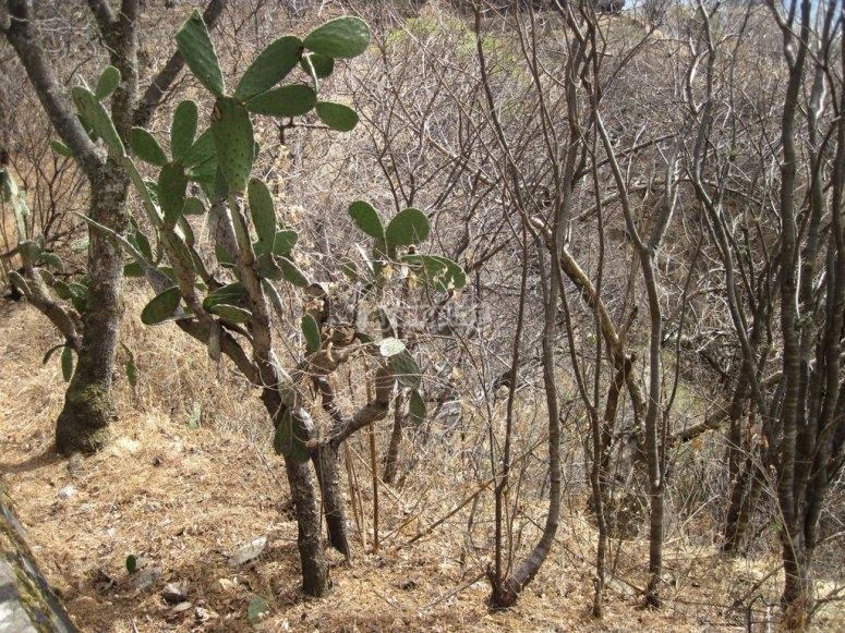Cactus y arboles secos