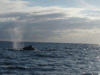 Los delfines nos acompañan