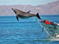 Paseando con delfines