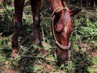 Horseback Riding near Chichen