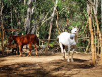 Horseback Riding in the Mayan Forest