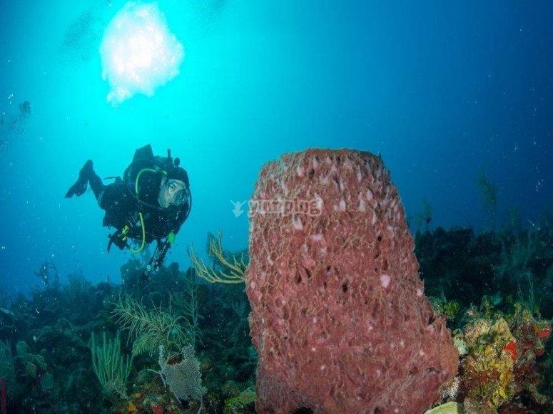 Descubre el mundo marino