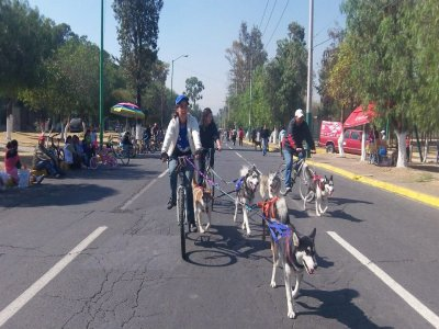 Extreme Mushing Mexico