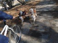 Vamos en bici que ellos ayudan
