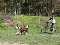 Bikejoring, una de las modalidades favoritas