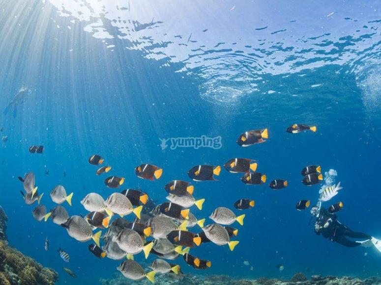 Descubre hermosos paisajes marinos en el Mar de Cortés