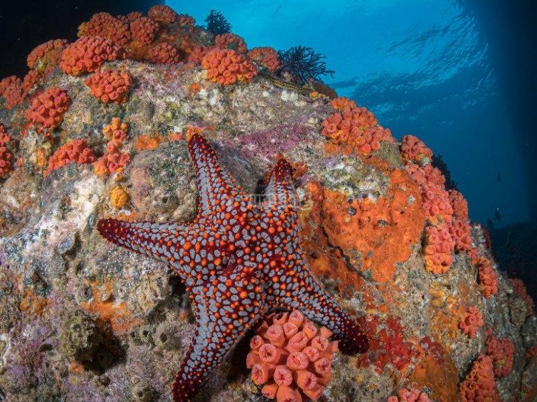 El Mar de Cortés ha sido llamado el Acuario del Mundo