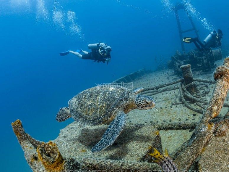 Impresionantes vistas debajo del mar