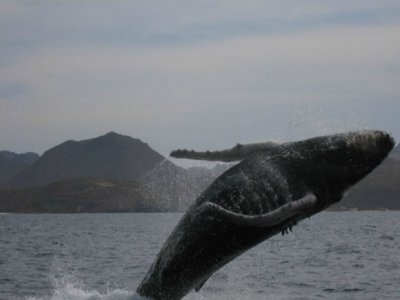 Grey whale watching tour in La Paz
