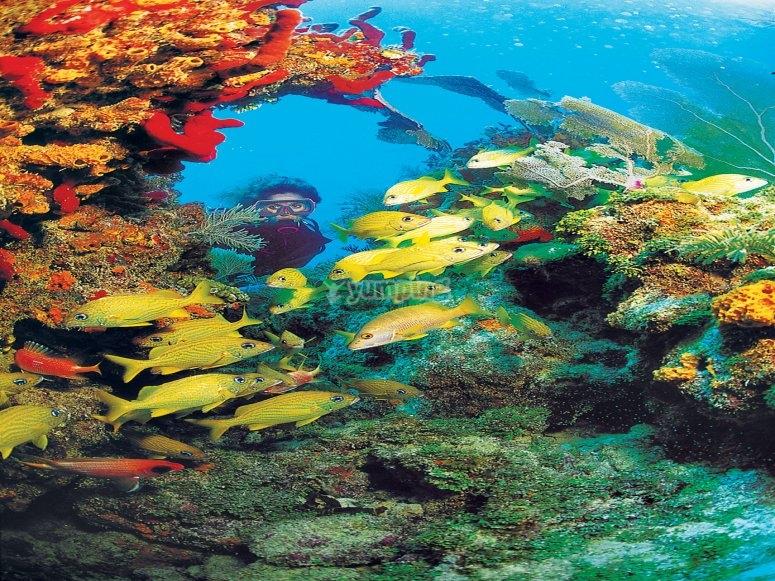 Jardines coralinos