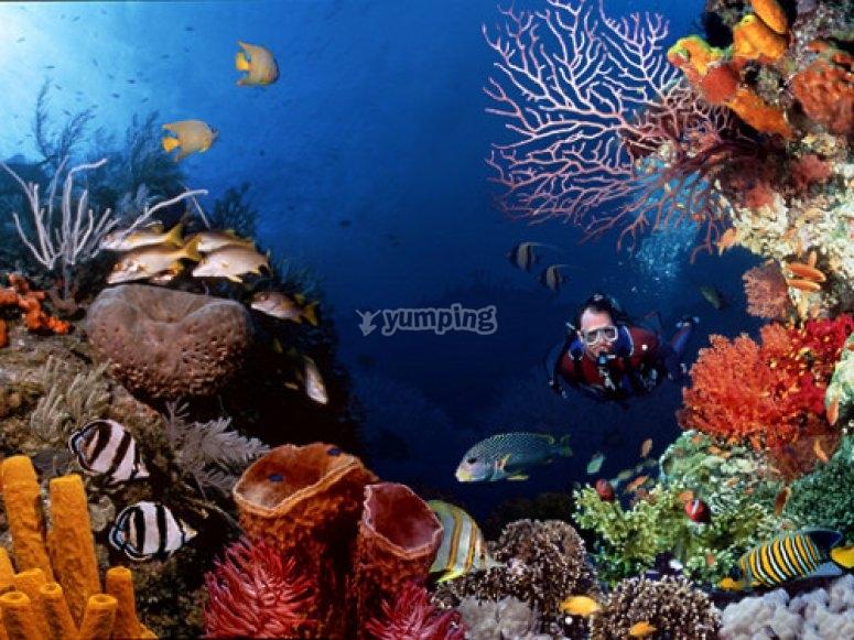 Buceo en arrecifes