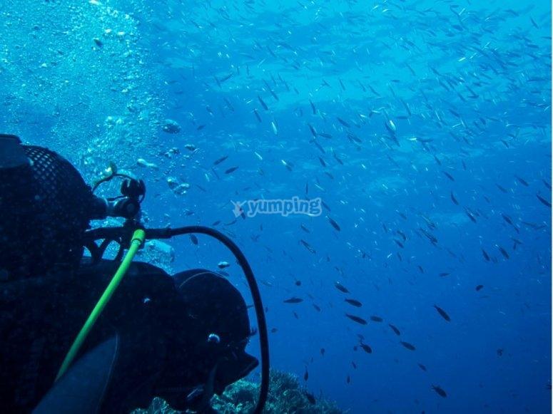 Buzo bajo el mar
