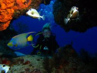 Scuba diving, 2 immersions. Palancar.
