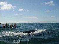 Admirando ballenas