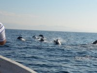 Avistamiento de delfines durante nuestro paseo