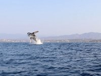 En temporada invernal podremos ver algunas ballenas